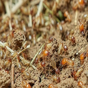 Caution Signs Of Termite Infestation